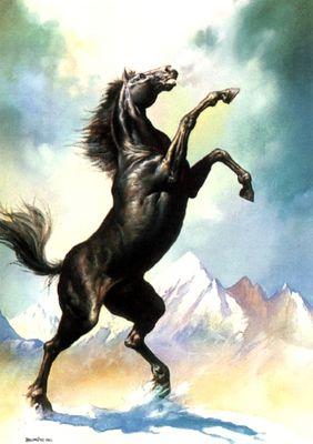 BV 1980 stallion