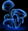 Digital Art   Shiny Mushrooms