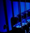 webstrings blue bridge