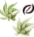 vectorbudleafs