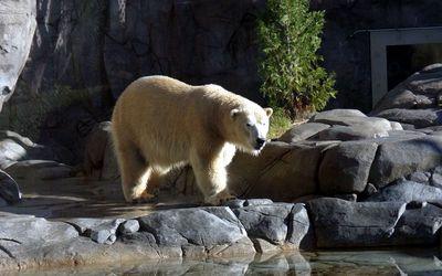 polarbear 1680x1050