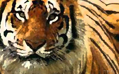 tiger 1680x1050