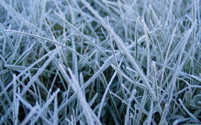 frostedgrass 1680x1050