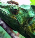 iguana 1680x1050