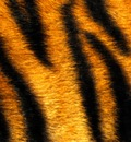mandolux tiger r
