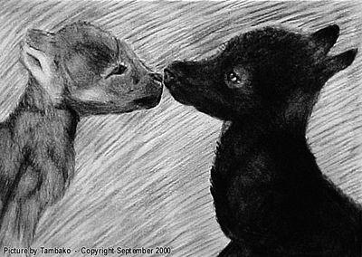 WolfPups