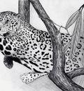 JaguarBranchBW
