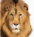 Lion headC