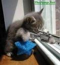 sniper5ei