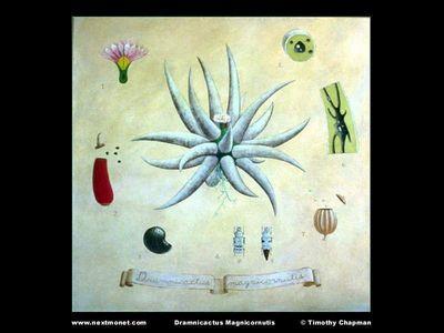 Dramnicactus Magnicornutis