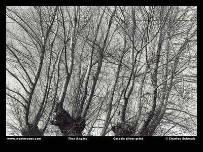 Tree Angles