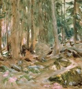 Pine Forest, Sargent