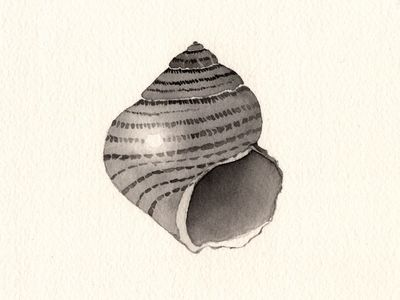 Simple Seashell