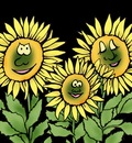 Sunflower Family