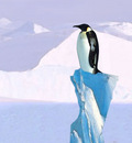 Penguin Perch