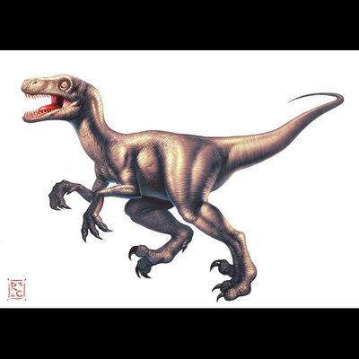 gd beckermayer velociraptor