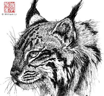 williamli lynx ink