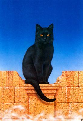 ciruelo cabral blackcat