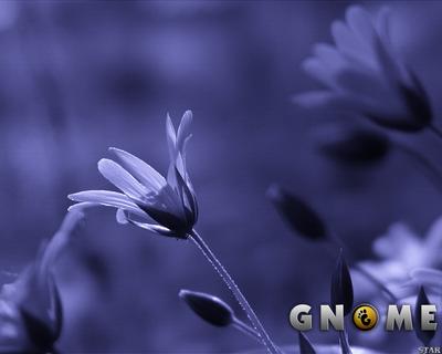 GNOME FlowerBlueScan 1280x1024