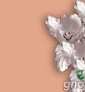 Flowers GNOME 1024x768
