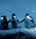 Penguingang 1600x1200