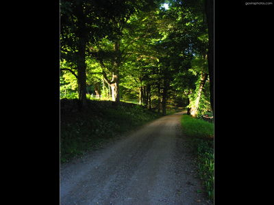 ws road in forest