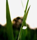 Rye Blade by Callu