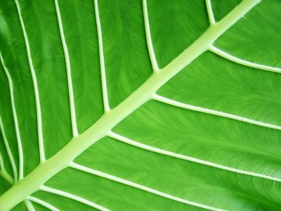 v plants2
