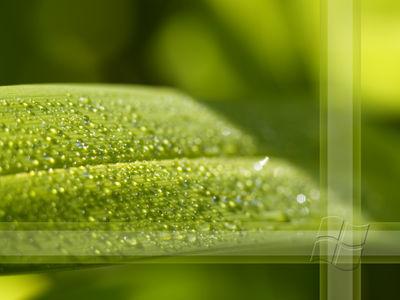 Plant by DJMattRicks