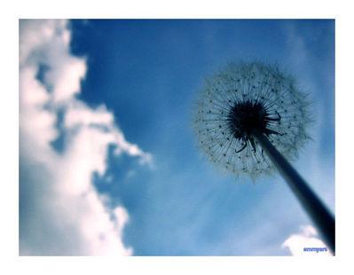 wish by primrosepath88