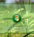 V wheat by DJMattRicks