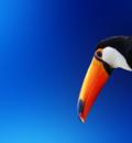 exoticbird16000cb