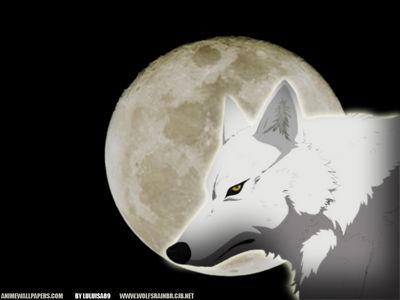 wolfsrain 7