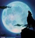 wolfsrain 8