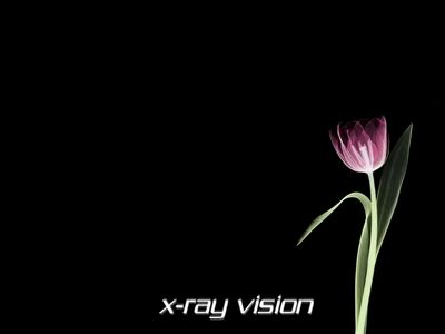 x ray tulip 1024x768