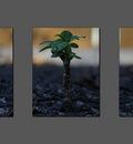 macro plant grey